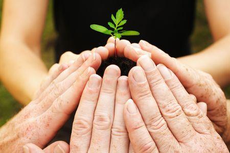 Photo pour Six hands around a small seedling - image libre de droit
