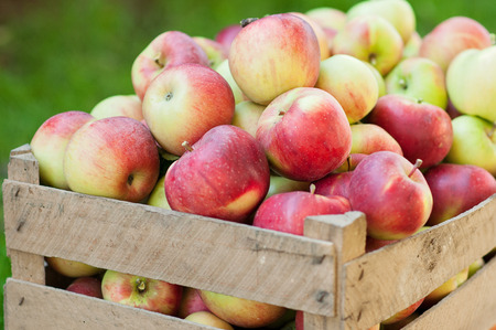 Photo for The upper part of the tray full of apples - Royalty Free Image