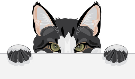 Illustrazione per Peeping funny cat on white background, vector illustration. - Immagini Royalty Free