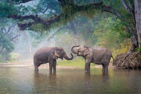 Photo pour Asian Elephants in a natural river at deep forest, Thailand - image libre de droit