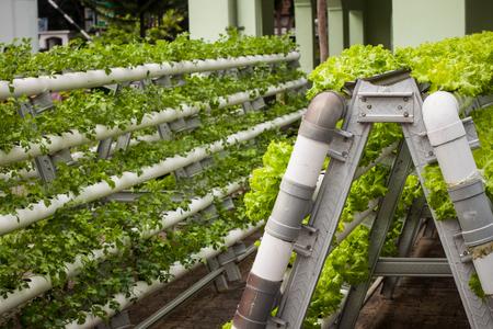 Foto de vertical garden with pipe pvc photo taken in jogja yogyakarta indonesia - Imagen libre de derechos