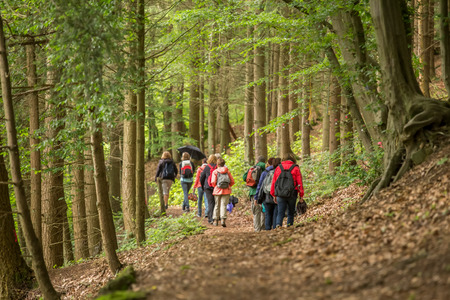 Photo for a group of walker in a forest - Royalty Free Image