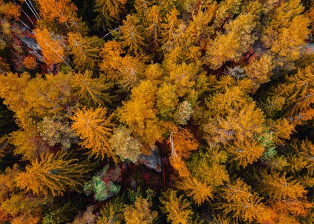 Photo for Top down aerial drone image of a forest, wild nature - Royalty Free Image