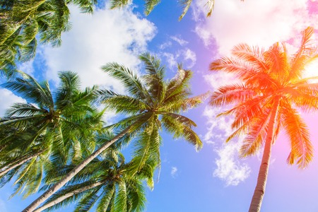 Photo for Red flare on coco palm trees. Tropical landscape with palms. Palm tree crown on cloudy sky. Sunny tropical island toned photo. Sunshine on palm leaf. Blooming tropical nature. Exotic island travel - Royalty Free Image