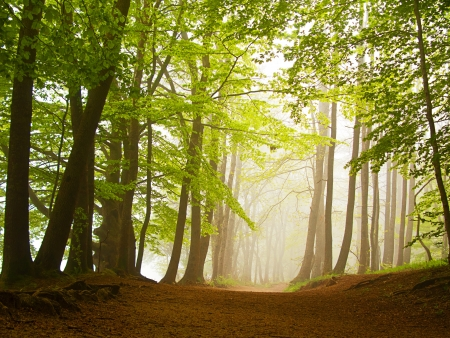 A green forest in spring covered by fog in the morning