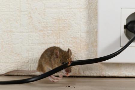 Photo for Closeup broken wire  on the background of mouse near wall inside high-rise buildings. Fight with mice in the apartment. Extermination. Small DOF focus put only to wire. - Royalty Free Image