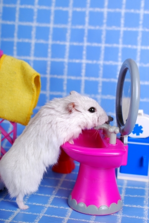 Photo for little white hamster cleaning up in the bathroom - Royalty Free Image