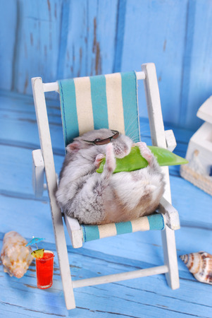 Photo for funny hamster wearing sunglasses relaxing on deck chair and eating a pod of green peas - Royalty Free Image