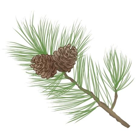 Illustration pour Pinecone Collection  - image libre de droit
