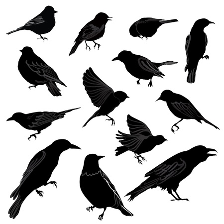 Set of birds silhouette  Vector illustration