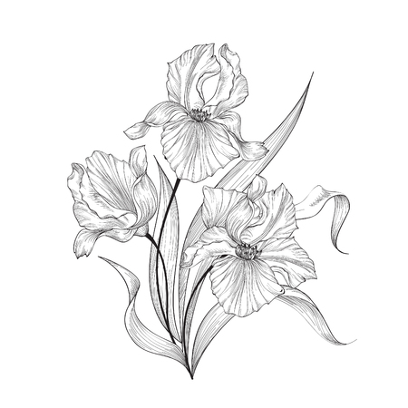 Illustration pour Floral bouquet with flower iris. Vintage Fourish Greeting Card Design. Swirl flower posy engraving border. Floral etching background - image libre de droit