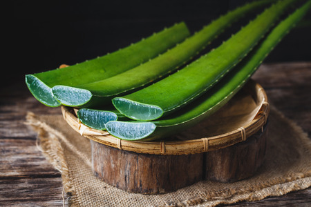 Photo for Fresh Aloe Vera - Royalty Free Image