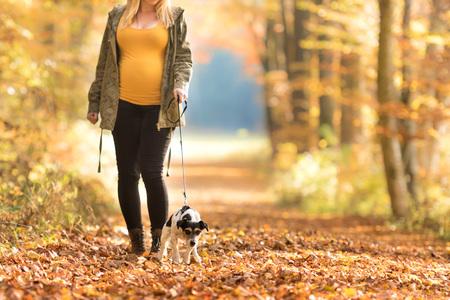 Foto de Pregnant woman with a dog walking in the autumn - jack russell terrier - Imagen libre de derechos