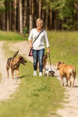 Foto de Dog sitter walks  with many dogs on a leash. Dog walker with different dog breeds in the beautiful nature - Imagen libre de derechos