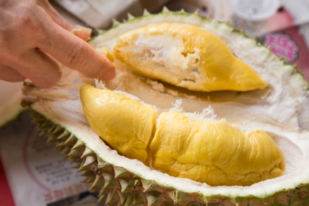Photo pour Hand picking yellow flash from husk of musang king durian variety - image libre de droit