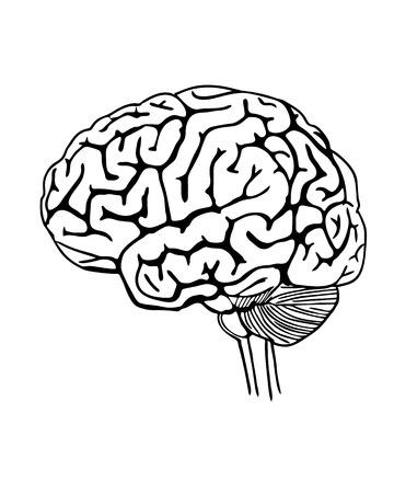 Ilustración de Vector outline illustration of human brain on white background - Imagen libre de derechos