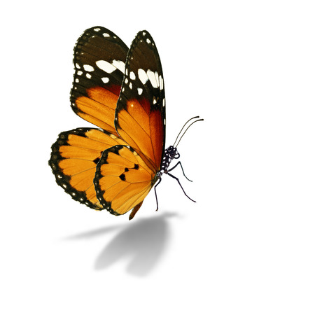 Photo pour Beautiful colorful butterfly isolated on white background. - image libre de droit