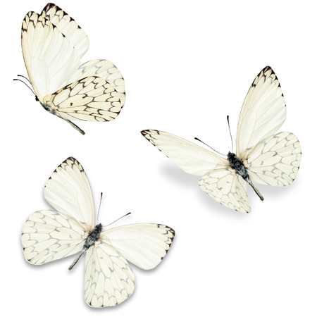Photo pour Three white butterfly, isolated on white background - image libre de droit