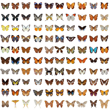 Foto de Collection of 100 butterfly and moth isolated on white background - Imagen libre de derechos