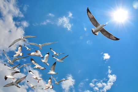 Foto de a group of flying seagull birds with one individual bird going in the opposite direction with blue sky background. - Imagen libre de derechos