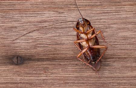 Foto de Dead cockroaches on wooden table - Imagen libre de derechos
