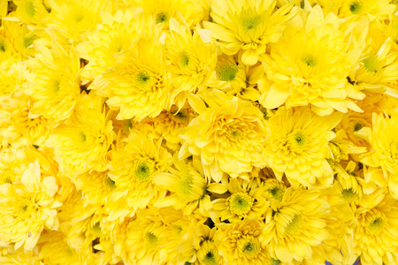 Foto de Yellow flower background - Imagen libre de derechos