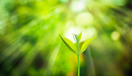 Foto de New fresh small plant growth up on green blurred nature with bokeh background under the sunlight - Imagen libre de derechos
