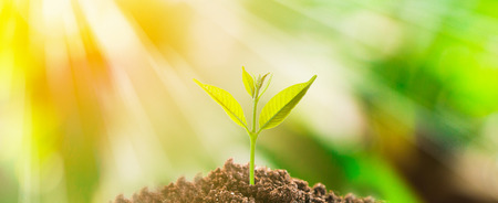Photo pour Small tree growth on soil with fresh green nature background and sunlight - image libre de droit