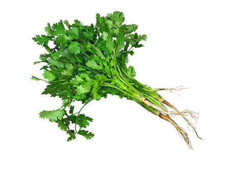 Photo pour Green fresh coriander isolated on the wooden table - image libre de droit
