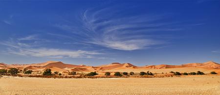 Photo for desert of namib with orange sand dunes. - Royalty Free Image