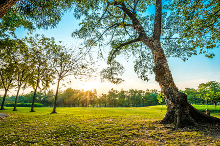 Photo for Beautiful green park, Public park with green grass field and tree - Royalty Free Image
