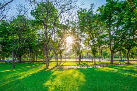 Photo pour Beautiful green lawn in city park under sunny light at sunset time - image libre de droit