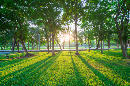 Photo pour Park and recreation area in the city, Green field and tree - image libre de droit