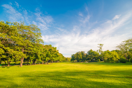 Photo pour Beautiful meadow and tree in the park, Bangkok Thailand - image libre de droit