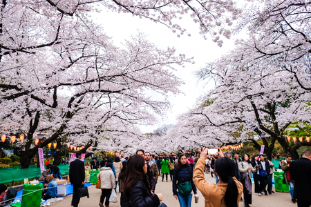 Photo pour TOKYO,  JAPAN - APRIL 6, 2017: Crowds enjoy the spring cherry blossoms by walking in seasonal at Ueno Park. - image libre de droit