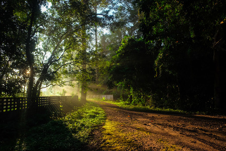 Photo for Sun light on walk way tropical forest with fog in morning, Nature landscape background - Royalty Free Image