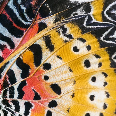 Photo pour Macro close up of an Monarch Butterfly Wing - image libre de droit