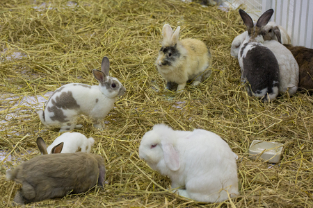 Photo for Rabbits in the cage - Royalty Free Image