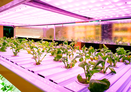Photo for a Hydroponics in growing technology - Royalty Free Image