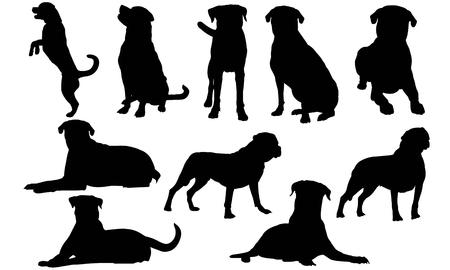 Illustrazione per Rottweiler Dog silhouette illustration - Immagini Royalty Free