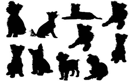 Illustration for Yorkshire Terrier Dog silhouette illustration - Royalty Free Image