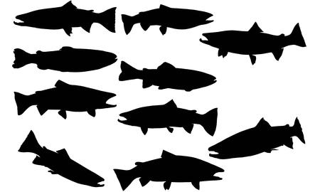 Steelhead trout silhouette illustration
