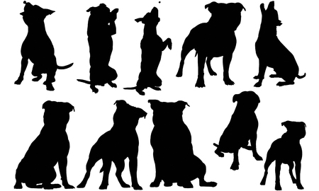 Illustration for Staffordshire Bull Terrier Dog silhouette illustration - Royalty Free Image