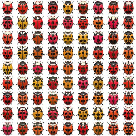 A sheet of ladybug illustrations that tile seamlessly as a pattern.  Isolated over white.