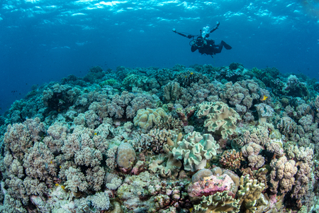 Photo for Abundance reef and marine life in Wakatobi National Park, Indonesia. - Royalty Free Image