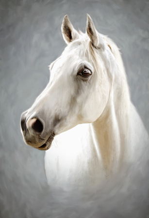 Photo for a photograph stylized as painting portrait of a white horse - Royalty Free Image