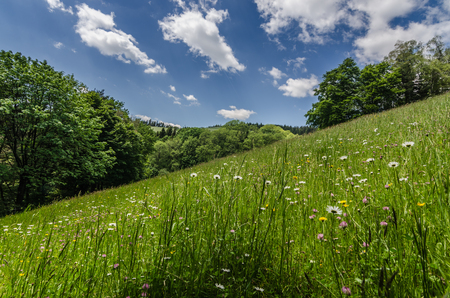 Foto de fresh grass on a mountain in the spring - Imagen libre de derechos