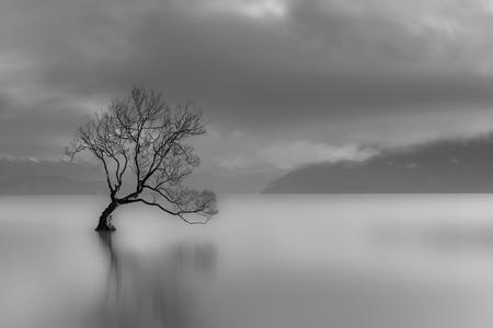 Foto de Lone Tree, Lake Wanaka, New Zealand black and white - Imagen libre de derechos