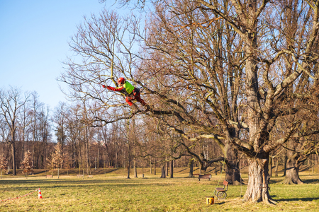 Photo pour Arborist men standing against two big trees. The worker with helmet working at height on the trees. Lumberjack working with chainsaw during a nice sunny day. Tree and nature - image libre de droit