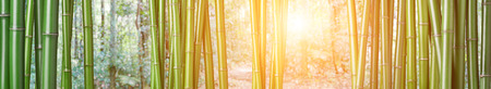 Photo for closeup of chinese green bamboo - Royalty Free Image